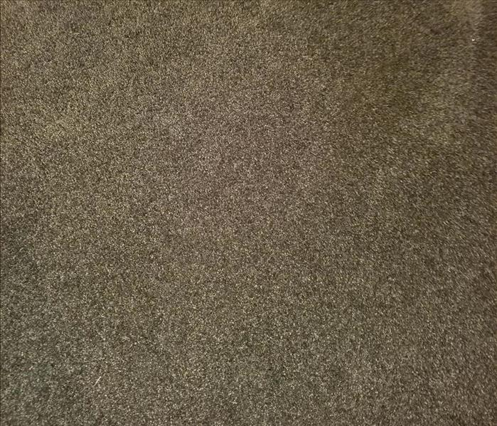 In-Home Carpet Cleaning After