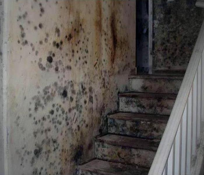 Mold Damage In Bellmore