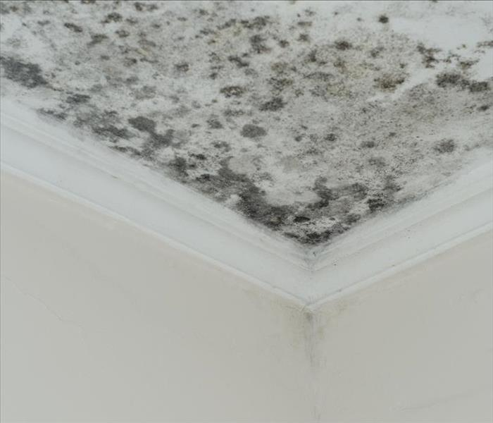 mold damage ceiling