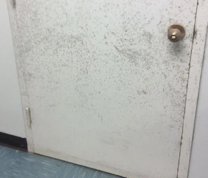 Why SERVPRO Do You Know What is Causing Mold and Your Wantagh Home
